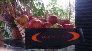 jablka (3)